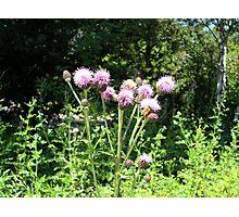 Purple Flowers & Bumble Bee Photographic Print