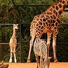 Perth Zoo's New Addition by Sandra Chung