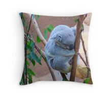 Koala and its Joey - Blackbutt Nature Reserve Newcastle Australia Throw Pillow