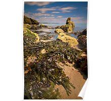 Seaweed Dressing Poster