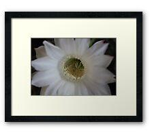 Inside the Cactus Blossom Framed Print