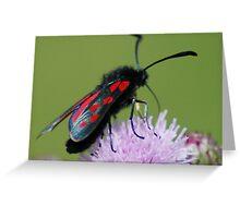 Six Spot Burnett on Thistle, Pipes Place,Shorne,Kent Greeting Card
