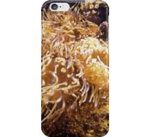 "Sea Anemone-""sea nettle"" iPhone Case/Skin"