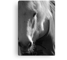 White Horse at Smith's Farm, Shorne , Kent Canvas Print