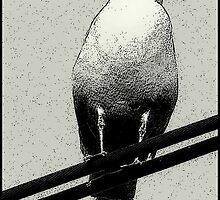 Bird on a Wire...Or Two by paintingsheep