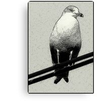 Bird on a Wire...Or Two Canvas Print