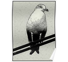 Bird on a Wire...Or Two Poster