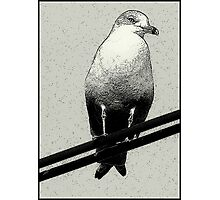 Bird on a Wire...Or Two Photographic Print