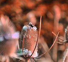 Bumble Bee by Ann Eldridge