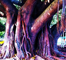 Oldest tree  by LESLEY B