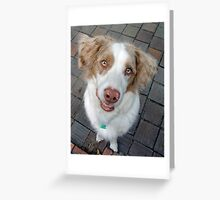 Scooby the Australian Shepherd Poses Greeting Card