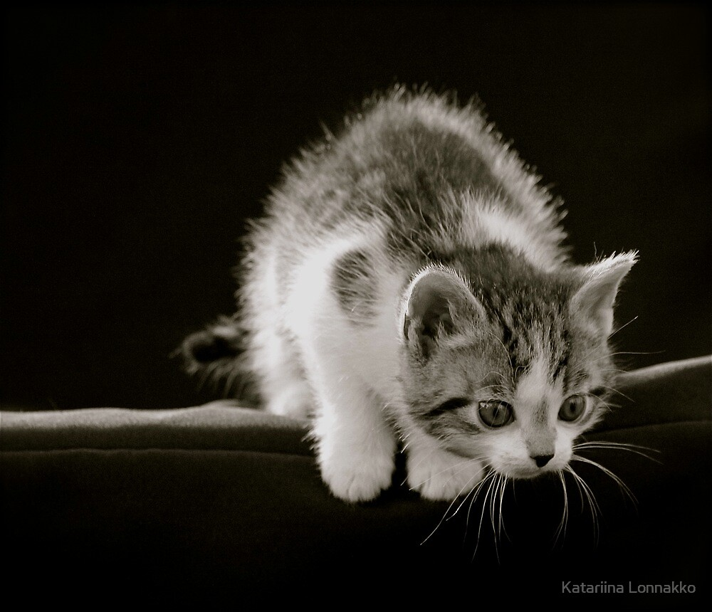 <3 MeoW <3 by Katariina Lonnakko
