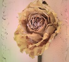 A Very Prissy Rose by Elaine Teague