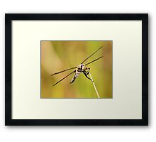 Curious Spotted Dragon Framed Print