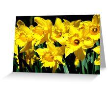 Dancing Daffodils Greeting Card