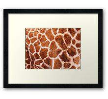 Baby Giraffe Design Framed Print