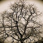 The mighty tree. by Amanda Gazidis