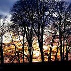 Sunset trees Avebury uk by Amanda Gazidis