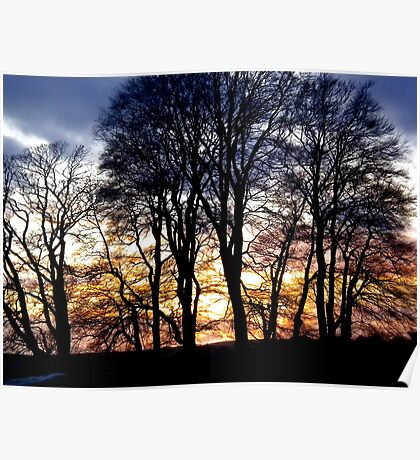 Sunset trees Avebury uk Poster