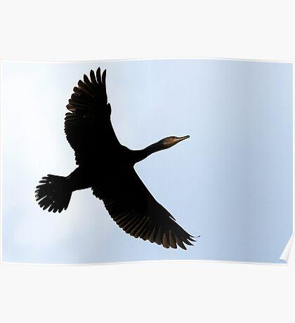 Flight Of The Cormorant Poster