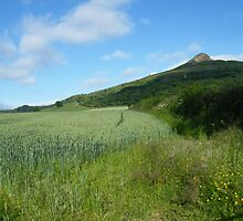 Roseberry Topping North Yorkshire by Matthew King