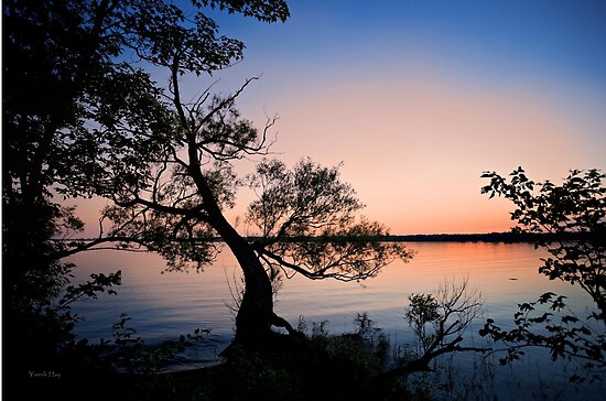 Silhouetted Tree at Sunset by Yannik Hay