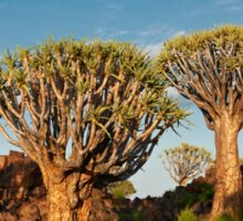Quiver tree forest, Aloe dichotoma Sticker