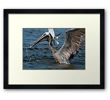 Brown Pelican and company Framed Print