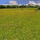 Meadow Flowers by Tom Gomez