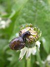 Snail by rhian mountjoy
