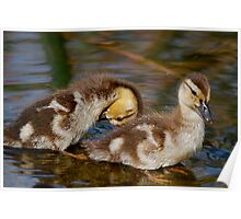Quick 'n Quack 2 Poster