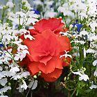 Begonia Bouquet by missmoneypenny