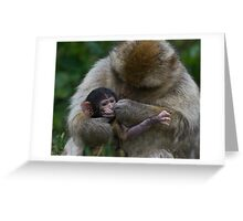 Two Week Old Barbary macaques Greeting Card