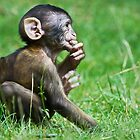 Eight Week Old Barbary macaques by Elaine123
