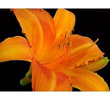 Orange  Sorbet © Photographic Print