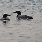Two Loons by AuntieJ