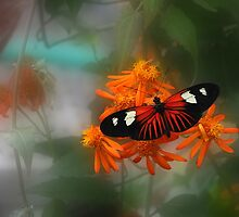 Butterfly Dreams - Krohn Conservatory Cincinnati by Tony Wilder