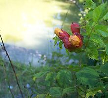 Morning Dew at the Creek by Timothy Eric Hites