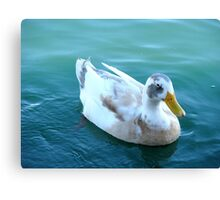 """The odd ball Duck"" Canvas Print"