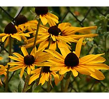 Yellow Gold Flowers Photographic Print