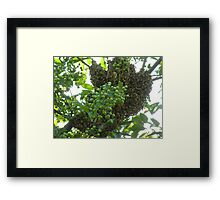 crowded crabapple  Framed Print