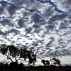 Difference Clouds - Stuart Highway by jhea5333