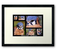 American Kestrel ~ Raptor Series Framed Print