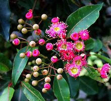 buds to blooming by waterchild