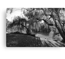 Willow Tree Sunshine Canvas Print