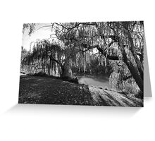 Willow Tree Sunshine Greeting Card