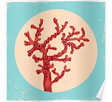 Red coral Poster