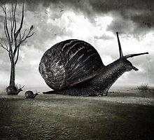 Snail Trail by Ash Sivils