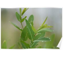 Greenery with morning dew Poster