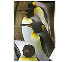 Tuxedo Crowd - King Penguins Poster